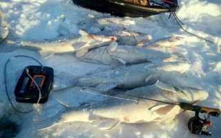 Особенности работы эхолота Практик ЭР 6 Pro-2, стоимость и отзывы рыбаков